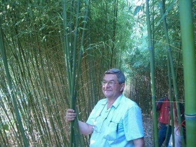 Bamboo-Bambusz Faiskola