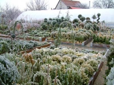 Flora-Pack Kertészet Dunaújváros