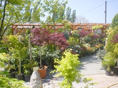 Garden Club Kft. - Díszkertem webáruház