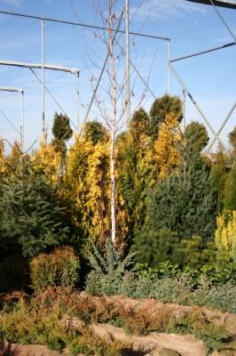 KEFAG Zrt. Juniperus Parkerdészet
