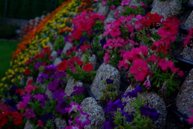 Virágzókertek