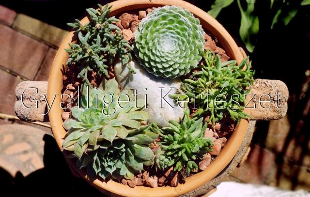 Gyálligeti Kertészet