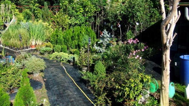 Karkus faiskola és kertészet