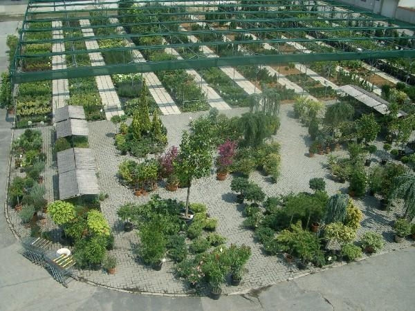 Bioritmus Kertészet