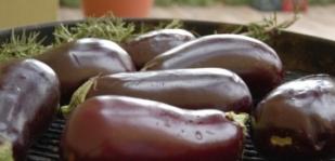 Padlizsán (tojásgyümölcs) termesztése és felhasználása