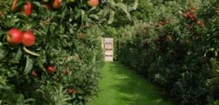 Szeptember eleje: kezdődik az alma- és körteszüret